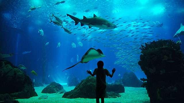 Lisbon Oceanarium