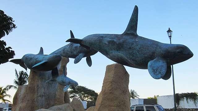 Vallarta Whale