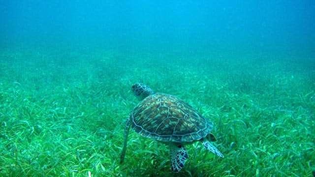 Snorkeling in Tamarindo