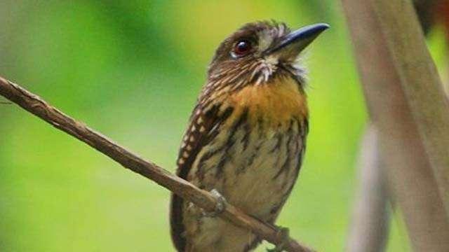 wildlife at corcovado (1)