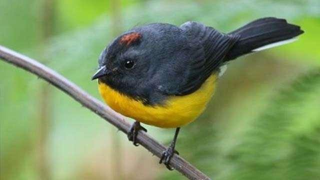 bird watching (1)
