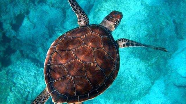 7 sea turtles