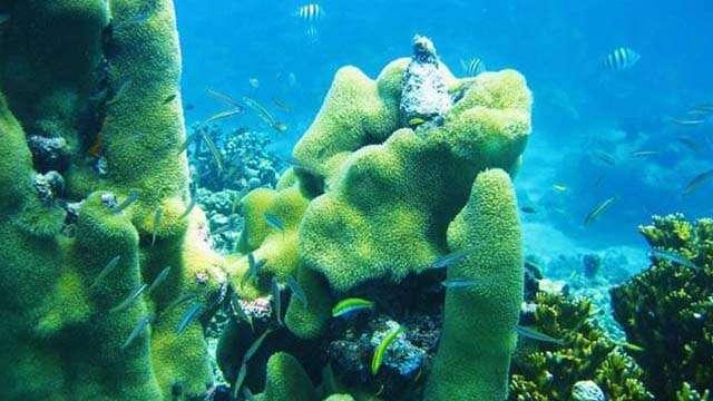 8 reef