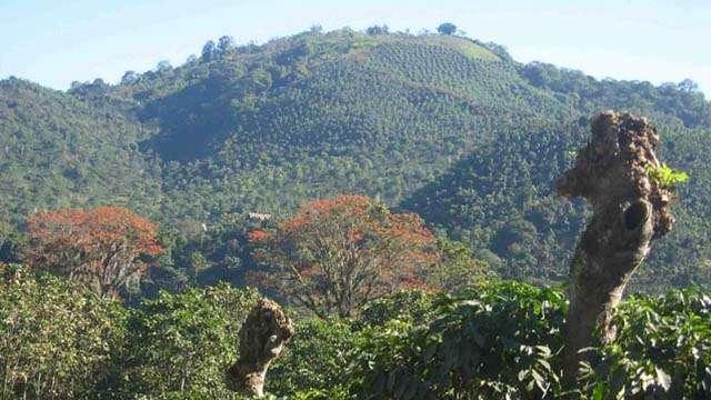 coffee fields tour