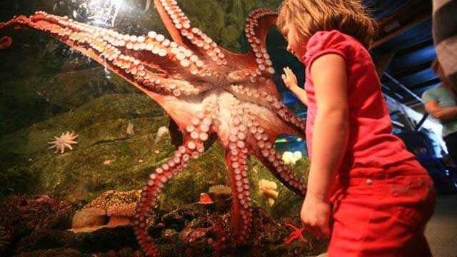 giant octopus seattle