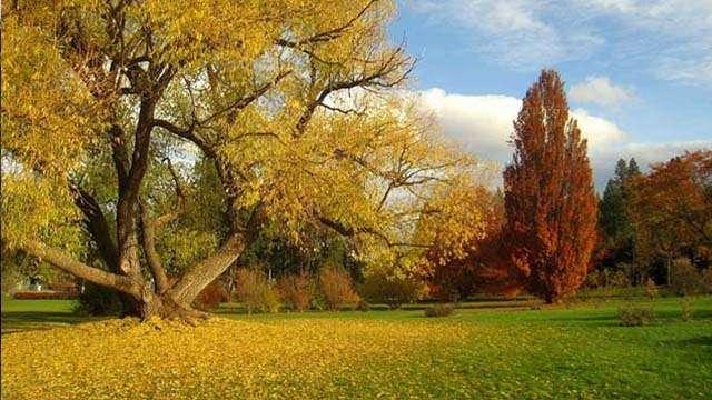john a finch arboretum spokane washington