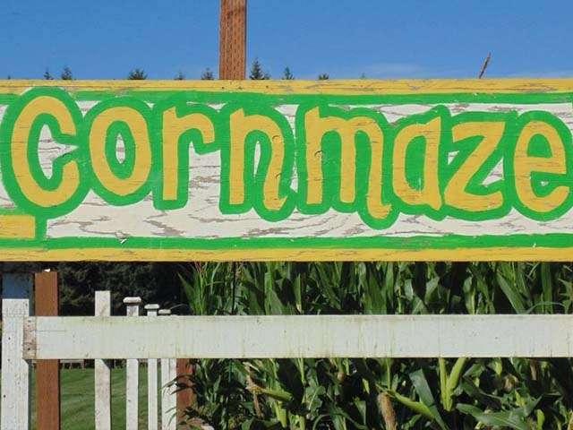 rutledge corn maze olympia washington