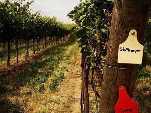 stottle winery olympia washington1