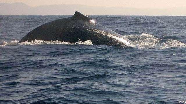 whale st lucia