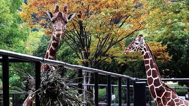 asa zoo