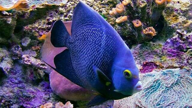 great mayan reef