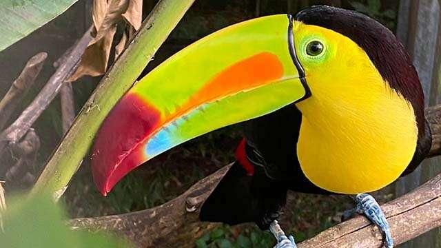 toucan rescue ranch