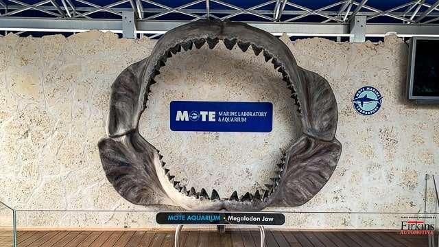 Mote Aquarium, Sarasota FL