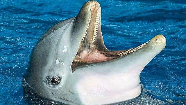 Dolphin Cruise, Gulf Shores