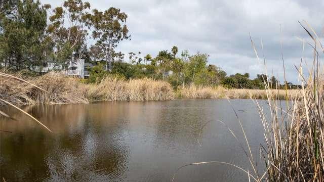 Buena Vista Lagoon