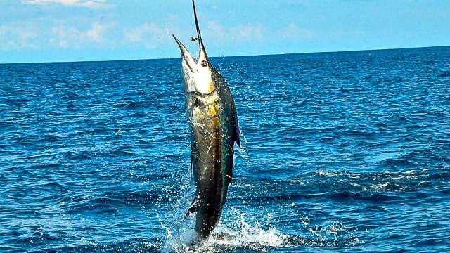 Catch a Trophy Fish