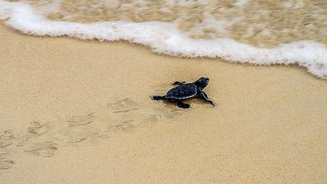 Meet a Sea Turtle at Loggerhead Marinelife Center