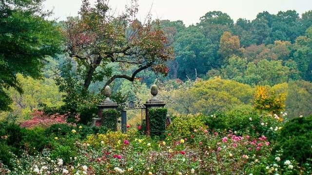 Rose Garden Dumbarton Oaks