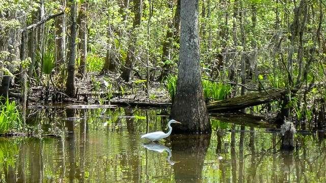 Swamp tour - Lafayette LA