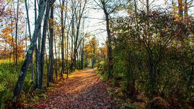 Bog Meadow Trails - Saratoga Springs NY