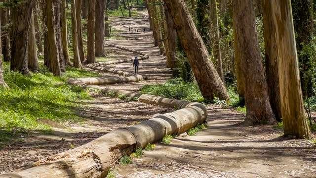 Andy Goldsworthy Woodline - Presidio  San Francisco