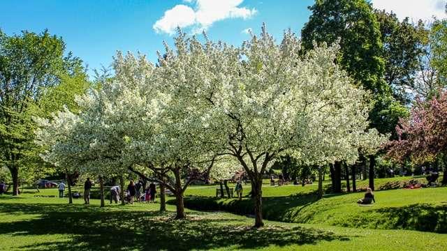 Congress Park - Saratoga Springs, NY