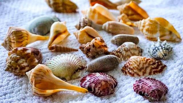 Seashells Sanibel & Captiva Islands