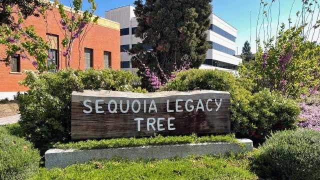 Sequoia Tree Legacy