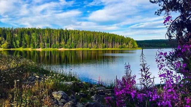 Kelowna BC - Lake & Forest