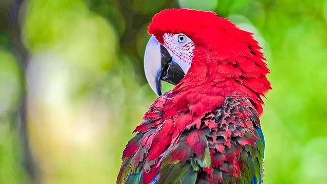Parrot Island Sanctuary