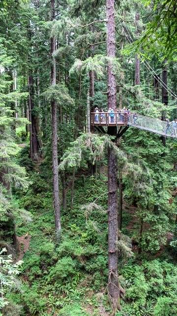 Redwood Sky Walk - Eureka CA