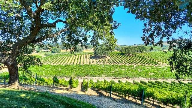Stolpman Vineyard Santa Ynez Valley CA